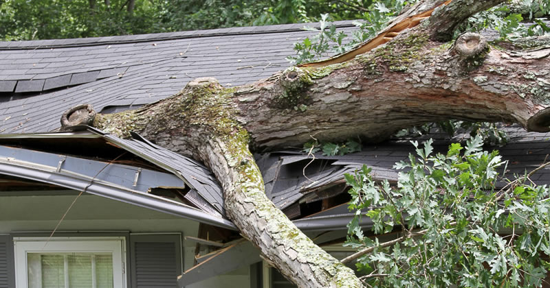 roof damaged by falling tree